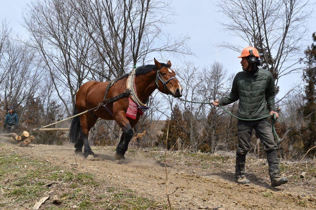 ヤマトの馬搬訓練