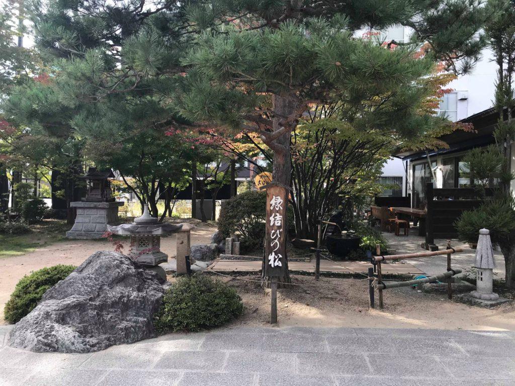 四柱神社の縁結びの松