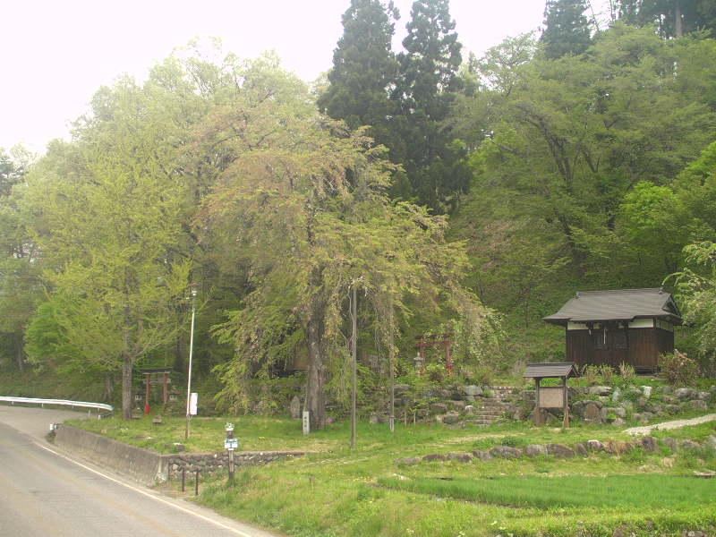 徹然桜ライブカメラ