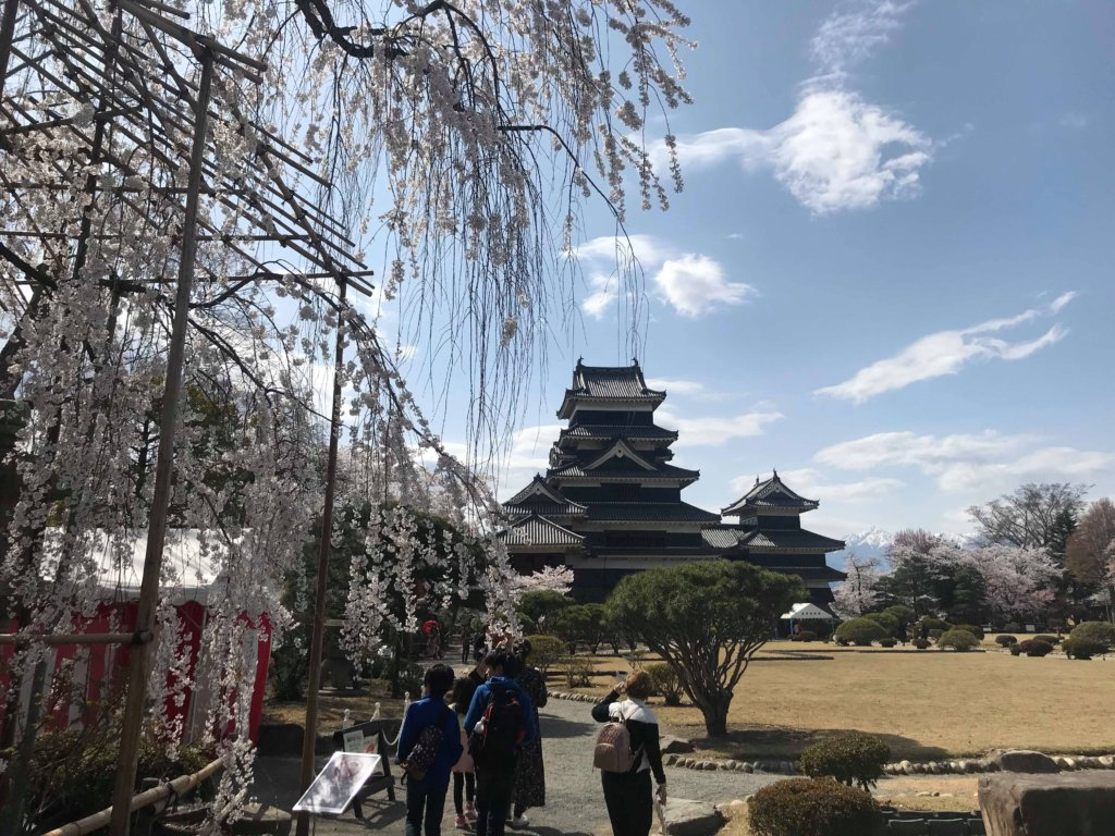 松本城本丸庭園の桜