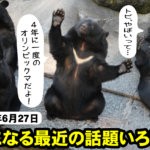 【長野県内の気になる話題】2019年6月25日~クマ大量発生!トビ狂暴化