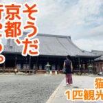 猫娘のカラーのすすめ番外編【ちんまりと京都観光してみた】